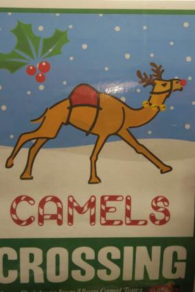 Mit dem Kamel durchs Outback